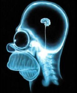 Cérebro Homer Simpson